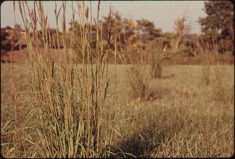 "Title	EXAMPLE OF ONE SPECIE OF TALL GRASS, BIG BLUESTEM, MAKING A COMEBACK IN OVERGRAZED PASTURE NEAR TROY, KANSAS, IN DONIPHAN COUNTY IN THE EXTREME NORTHEAST CORNER OF THE STATE CONSERVATIONISTS SAY THIS AREA IS UNIQUE BECAUSE IT CONTAINS THE ONLY HARDWOOD FOREST IN KANSAS IN ADDITION TO TALLGRASS PRAIRIE<br /> Author	Duncan, Patricia D., 1932-, Photographer (NARA record: 8464441)<br /> Record creator	Environmental Protection Agency. (12/02/1970 - )<br /> Date	09/1974<br /> Current location	<br /> National Archives and Records Administration, College Park Link back to Institution infobox template<br /> Still Picture Records Section, Special Media Archives Services Division (NWCS-S)<br /> Record ID	<br /> NARA Logo created 2010.svg	This media is available in the holdings of the National Archives and Records Administration, cataloged under the ARC Identifier (National Archives Identifier) 557104.<br /> This tag does not indicate the copyright status of the attached work. A normal copyright tag is still required. See Commons:Licensing for more information.<br /> English | español | français | italiano | македонски | മലയാളം | Nederlands | polski | português | русский | slovenščina | Türkçe | Tiếng Việt | +/−<br /> Record group: Record Group 412: Records of the Environmental Protection Agency, 1944 - 2006 (ARC identifier: 708)<br /> Series: DOCUMERICA: The Environmental Protection Agency's Program to Photographically Document Subjects of Environmental Concern, compiled 1972 - 1977 (ARC identifier: 542493)<br /> Agency-Assigned Identifier: 245/12/014652<br /> NAIL Control Number: NWDNS-412-DA-14652<br /> 412-DA-14652<br /> Source	U.S. National Archives and Records Administration<br /> Other versions	<br /> Please do not overwrite this file: any restoration work should be uploaded with a new name and linked in this page's ""Other versions ="" parameter, so that this file represents the exact file found in the NARA catalog record to which it links. The metadata on this page was imported directly from NARA's catalog record; additional descriptive text may be added by Wikimedians to the template below with the ""description ="" parameter, but please do not modify the other fields.<br /> (Note: Editors who post this notice are strongly encouraged to add details explaining how it applies to this file.)<br /> <br /> .tif<br /> <br />  <br /> <br /> .jpg<br /> <br /> Place	Troy (Doniphan county, Kansas, United States, North and Central America) inhabited place (39.767°N 95.083°W; NARA geographical record)<br /> Ambox notice.png<br /> The metadata on this page was imported directly from NARA's catalog record; additional descriptive text may be added by Wikimedians to the template below with the ""Description="" parameter, but please do not modify the other fields.<br /> Please help us by reporting errors! This may include misidentifications, erroneous images, typos in the metadata, possible copyright issues, and poor-quality images needing rescanning. (Be aware that, for documentary purposes, NARA often retains the original image captions, which may be erroneous, biased, or even misspelled.)<br /> Licensing:[edit]<br /> <br /> NARA Logo created 2010.svg	This file was provided to Wikimedia Commons by the National Archives and Records Administration as part of a cooperation project. The National Archives and Records Administration provides images depicting American and global history which are public domain or licensed under a free license.<br /> Български 