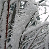 January 31, 2014.  Hoarfrost on a branch.  Bean Rock Property, private in-holding at Cascade-Siskiyou NM, Oregon