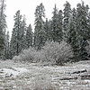 January 31, 2014.  Bean Rock Property, private in-holding at Cascade-Siskiyou NM, Oregon