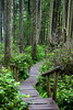 Cape Flattery Boardwalk