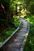 A boardwalk trail curves through the Olympic National Park on the way to Flapjack Lakes.