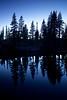Evening Tree Silhouettes