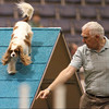 NAC_Day1_12Warmups_CockerSpaniel