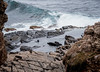 New Zealand Fur Seals Resting Near Pounding Surf, Kangaroo Island, South Australia 2014<br /> <br /> How many do you count?  I can find 21 seals.<br /> <br /> ©Gerald Diamond<br /> All rights reserved