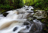 Tumbling Spring - Roaring Fork Motor Trail (Great Smoky Mountains National Park)
