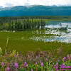 Following a Path from the Past - View from the historical Richardson Highway or Alaska Highway 4 of Moose grazing in backwaters of Delta River Valley near Donnelly between Fairbanks and Paxson (USA Alaska Donnelly; Obst FAV Photos 2011 Nikon D300 Image 0486)