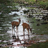 As the Deer Pants for Water, Scripture Verse