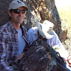 Banding Bald Eagle Nestlings in Arizona - a kiss for good luck!