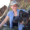 Banding Bald Eagle Nestlings in Arizona - banding done, nestling wants to be free!