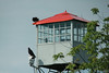 August 19, 2014 - (Runge Conservation Nature Center [fire tower] / Jefferson City, Cole County, Missouri) -- Turkey Vultures