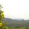 Box Bar Bald Eagle NestWatch - Creosote and the Mazatzal Mountains