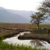 Pasture lands at the southern end of Lake Manyara and at the foot of the mountains on which Mbulu is situated.