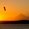 A Bald Eagle soars over Monti Bay, Yakutat, Alaska as Mt. St. Elias (18,008 ft.) provides a majestic backdrop at sunset.