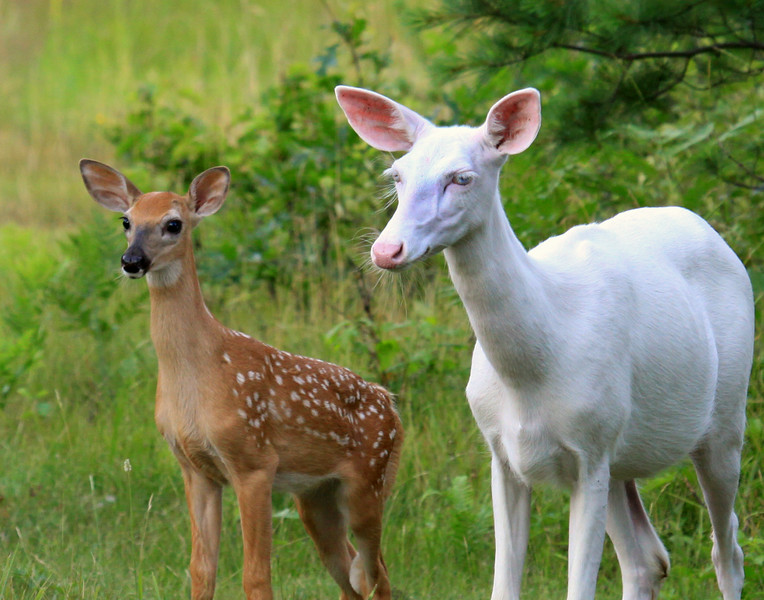 Blue Eyes and Her Fawn