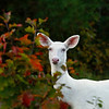 Albino Autumn Portraits 2