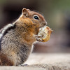 Chipmunk eating, Collier State Park Logging Museum, Oregon