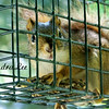 baby squirrel feeder 2 x