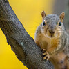 Squirrel, McKay Park, Pendleton, Oregon