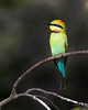 "This photograph of a Rainbow Bee-eater was captured within Magnetic Island, Australia (7/14). <FONT COLOR=""RED""><h5>This photograph is protected by the U.S. Copyright Laws and shall not to be downloaded or reproduced by any means without the formal written permission of Ken Conger Photography.<FONT COLOR=""RED""></h5>"