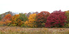 Fall foliage at Uplands Farm Sanctuary