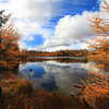 """  October's Golden Rewards   "" Golden Tamaracks of Autumn"