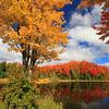 Autumn 2014  (3)