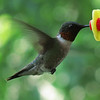 Hummingbird on July 9