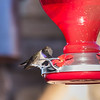 At the feeder_3765-20150330