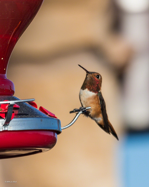 At the feeder_3779-20150330