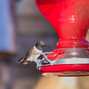 At the feeder_3764-20150330