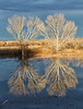 Bosque del Apache in reflection
