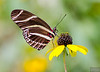 20140830_Sweetbriar Nature Center_166