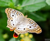 20140830_Sweetbriar Nature Center_187