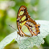 20140830_Sweetbriar Nature Center_241