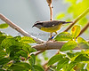 What a funny little name - Bananaquit!
