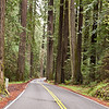 Avenue of the Giants, California