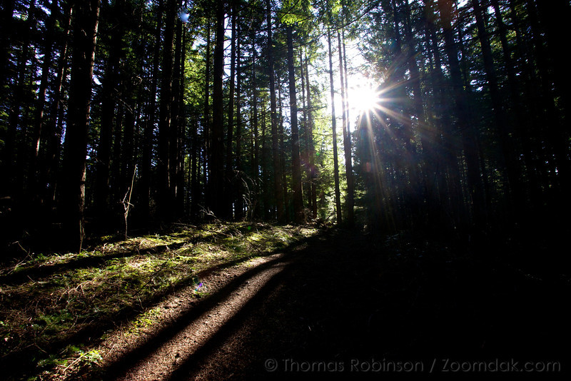 Light breaks through the trees to light the forest path at Coyote Wall in the Columbia River Gorge.