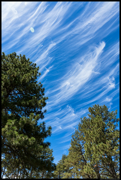 Wispy clouds through pines.