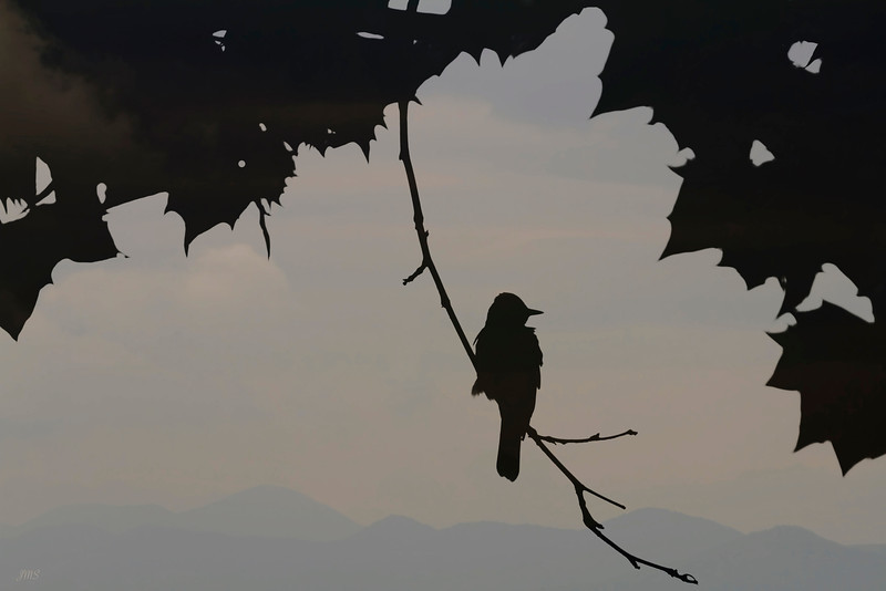 Ruffled Bird Silhouette & Mountains