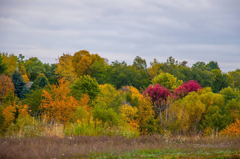 Some of the beautiful fall colors around Oskaloosa, Iowa. Photo taken on October 16, 2013 at Wm. Penn