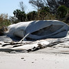 2004-ruptured geotube_Egmont Key