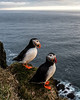 They are nesting high up on the edges of the cliffs where they are relatively safe from predators