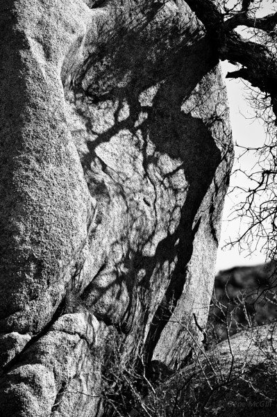 Shadow, Joshua Tree