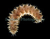 scaleworm from rope CB 040208 2867 smg