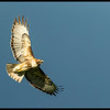 The front had moved across and now was behind the Red Tailed Hawk as the late afternoon sun poked through.