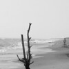 Corolla, NC- March 21, 2010
