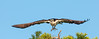 • Blue Cypress Lake<br /> • This looks like a stealth Osprey in flight