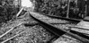 • Gatorland - Railroad • B&W photo of Gatorland's railroad tracks