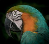 • Location - Butterfly World • Catalina Macaw - Look at my fantastic eye