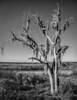 • Paynes Prairie Preserve State Park Lau Chau Trail • Interesting looking dead tree